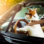 Do I need to get special dog car seats for my pets?